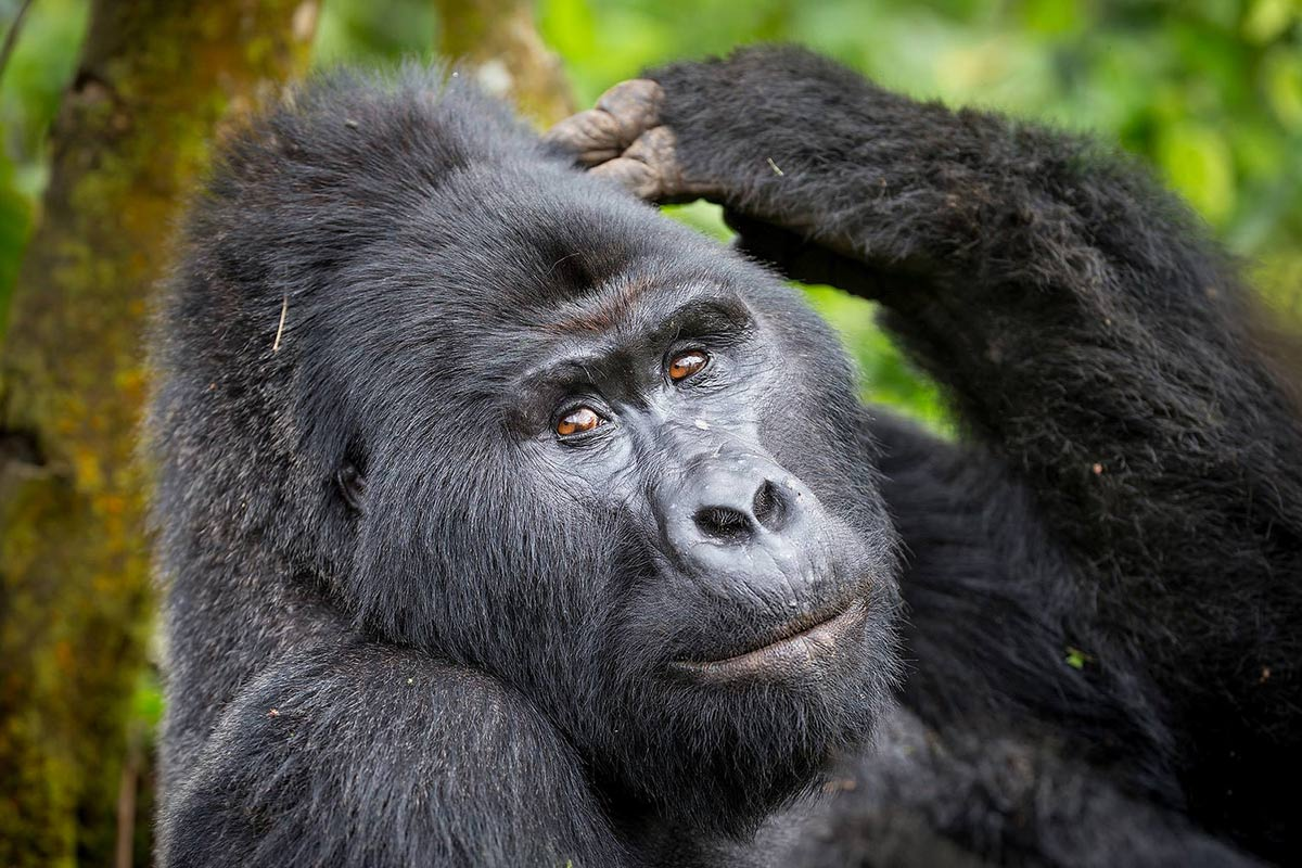 9 Days Deluxe Safari - Uganda Safari - Gorilla Tracking